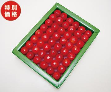 【特価】フルーツよしおか 温室さくらんぼ